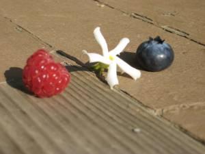 garden-berries