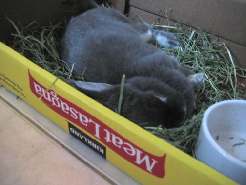 bunny lasagna