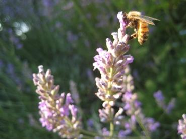 July garden016