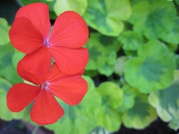July garden019