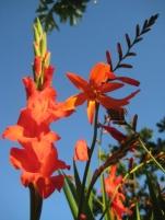 July garden021