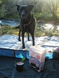 begging dog with donettes