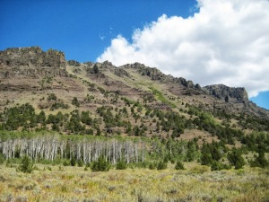 Big Indian Gorge Steens aspen