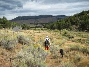 Mud Ankle Creek meadow