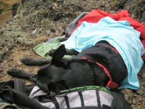 Steens Mountains sleepy dog